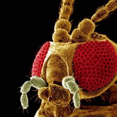 Život pod elektrónovým mikroskopom
